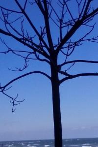 copacul din mare