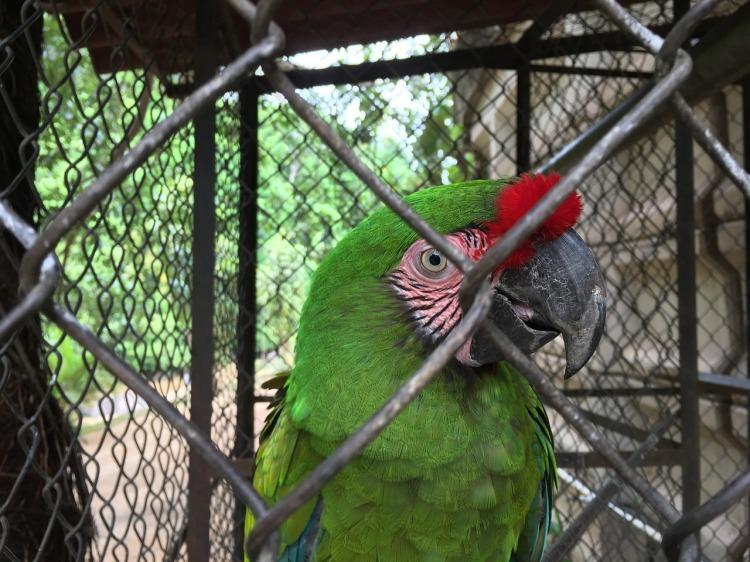bird-2882249_1280